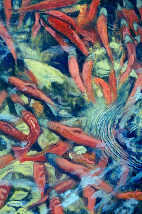 Spawning Kokanee by Melanie MacVoy, Acrylic on Canvas